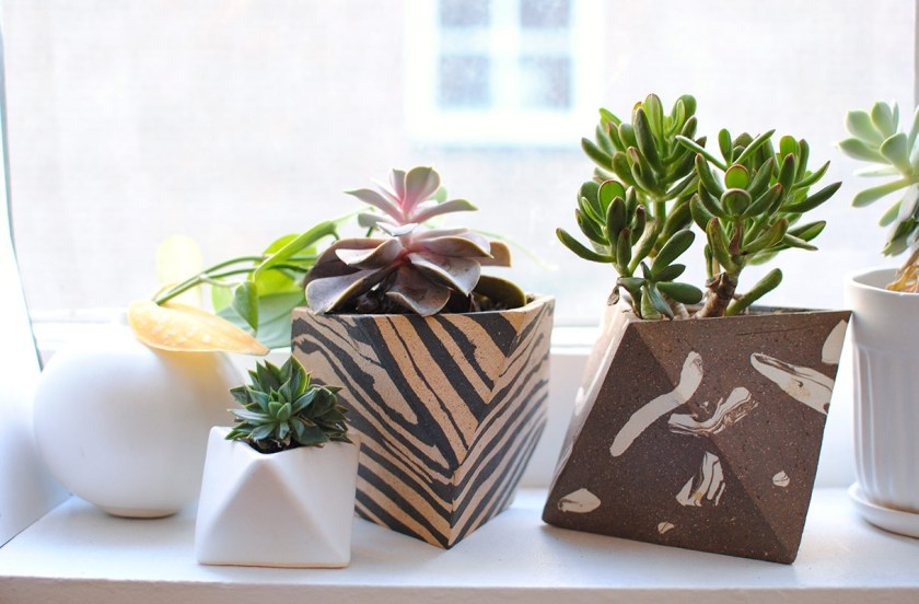 *Succulents should be watered once a week, and can survive in high or low light conditions. Photo by Claire Esparros.
